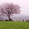 前原の一本桜♪?
