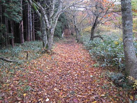針葉樹林と広葉樹林の境