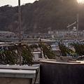 写真: 由比ヶ浜 03