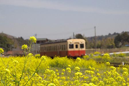 小湊鉄道の葉の花 01