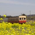 写真: 小湊鉄道の葉の花 01