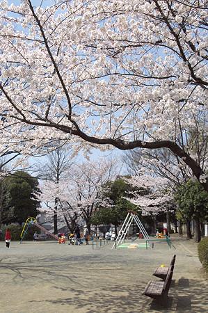 東戸塚の桜 10