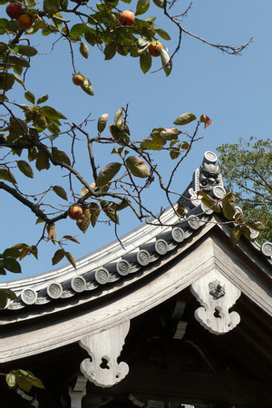 妙法寺の柿 02