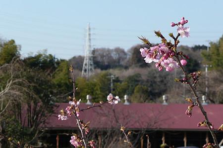 春の肥田牧場 02