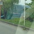 写真: 相模川なう